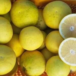 Limoni 4 stagioni