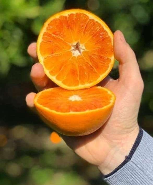 Arance varietà Navel