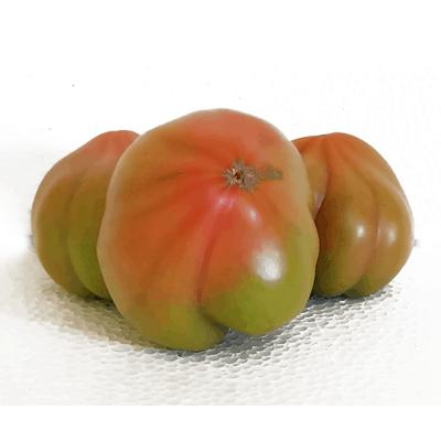 Pomodoro Costoluto Calabrese